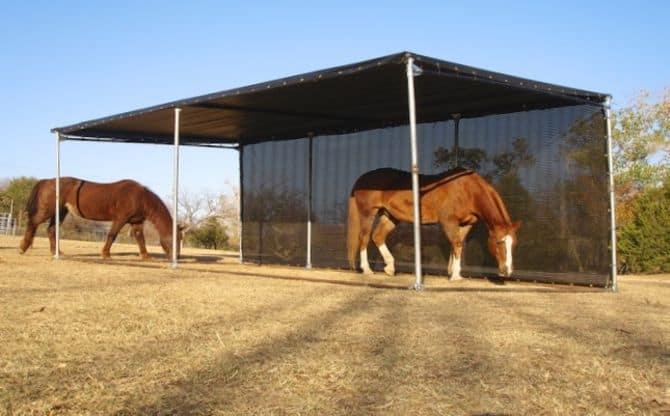 Horse Sunburn