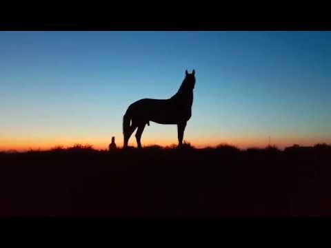 horse dusk