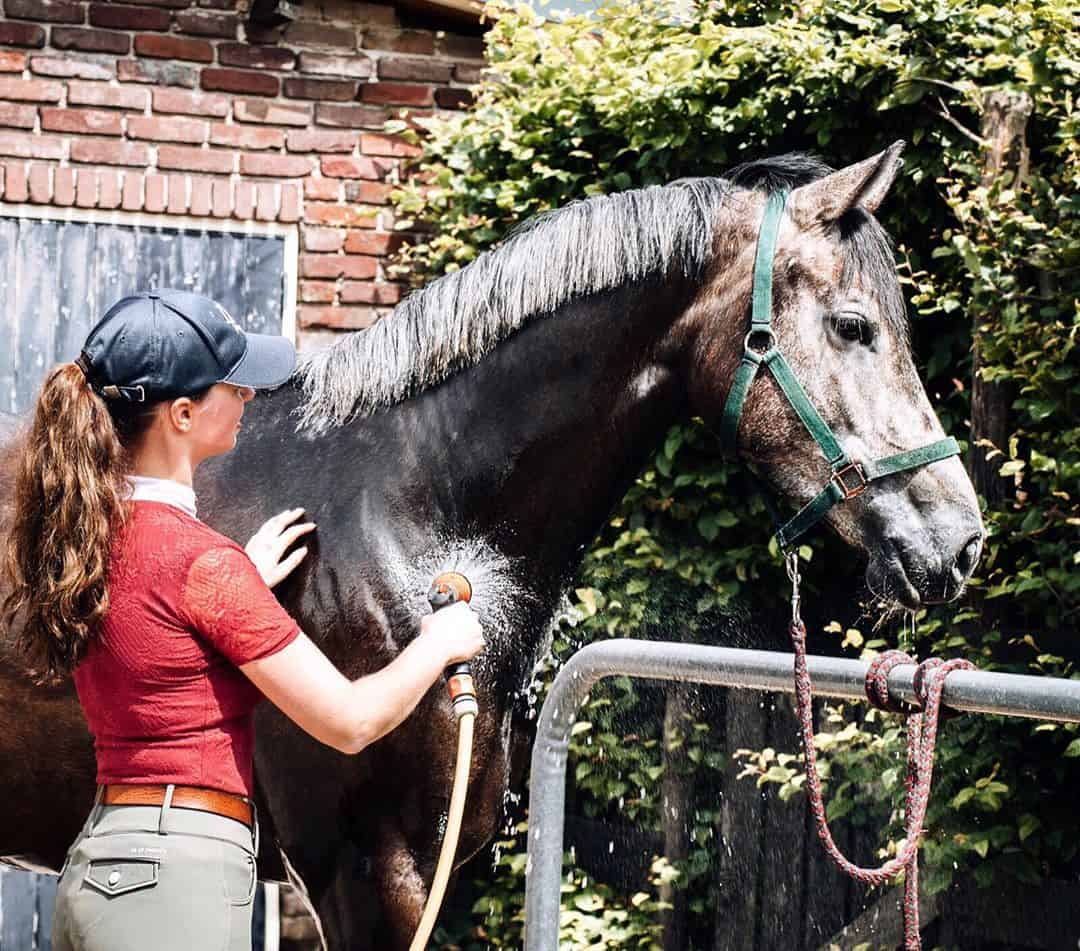 9 Essentials every rider should have in their Grooming Kit