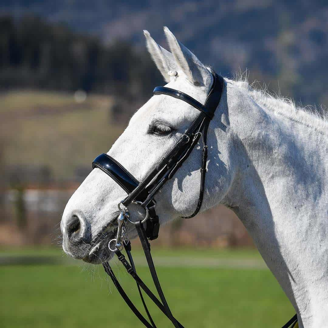 How to help horses that are difficult to bridle