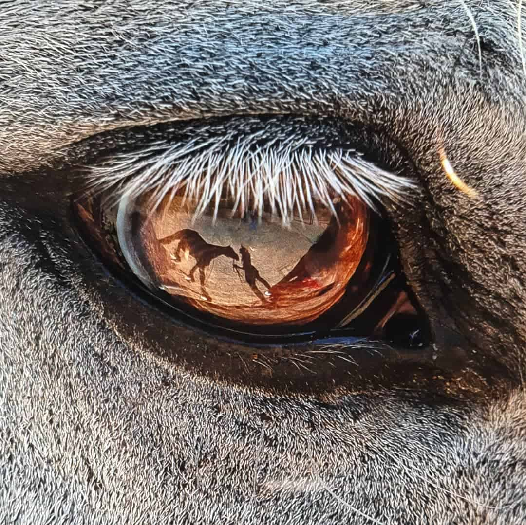 6 Facts about Horse Vision that you didn't Know