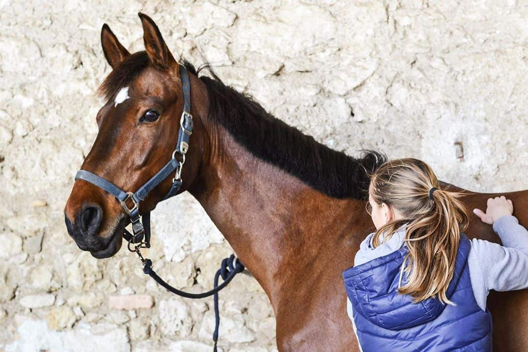 The Benefits of Equine Massage Therapy