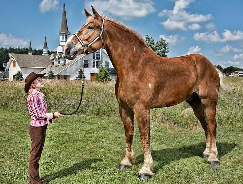 How to Choose the Right Sized Horse