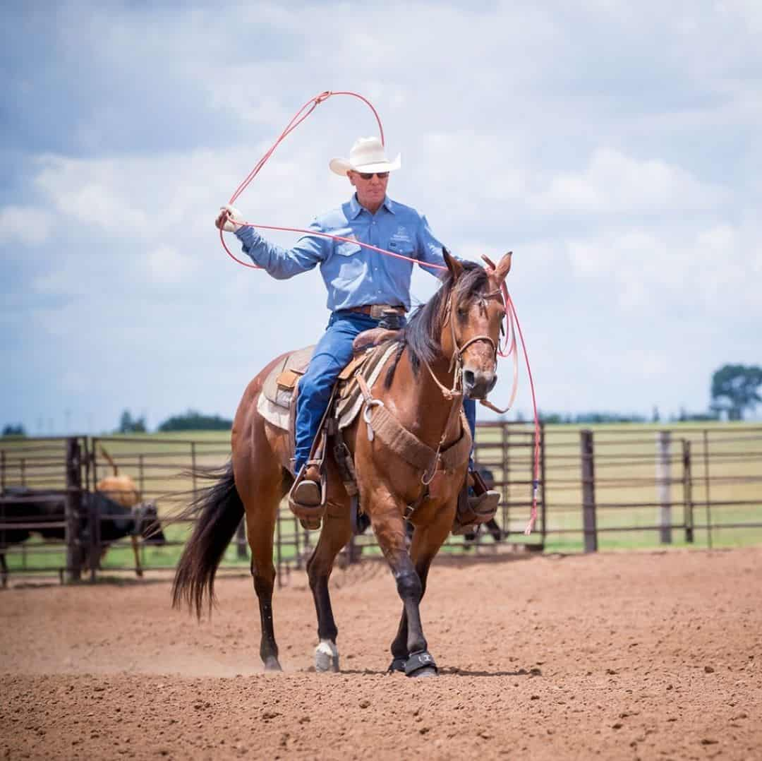 How Long does it take to break in a Horse - Seriously Equestrian
