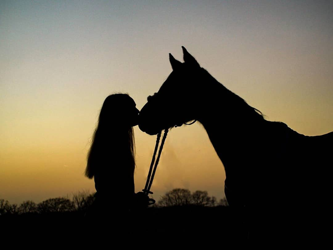 How to teach your Horse to give a Kiss