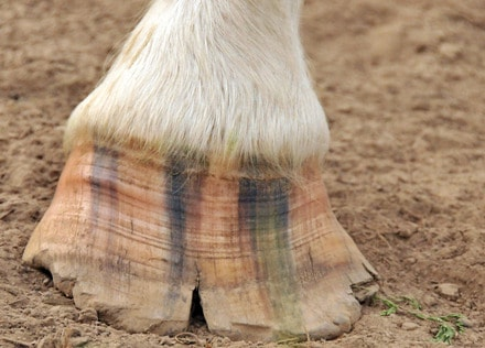 6 Tips to Avoid your Horses Hooves Cracking