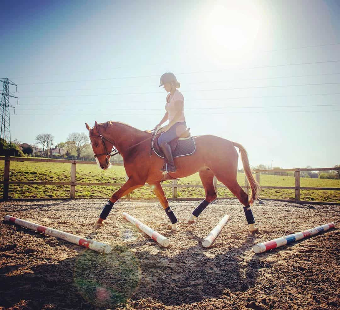 7 tips to mentally Stimulate your Horse
