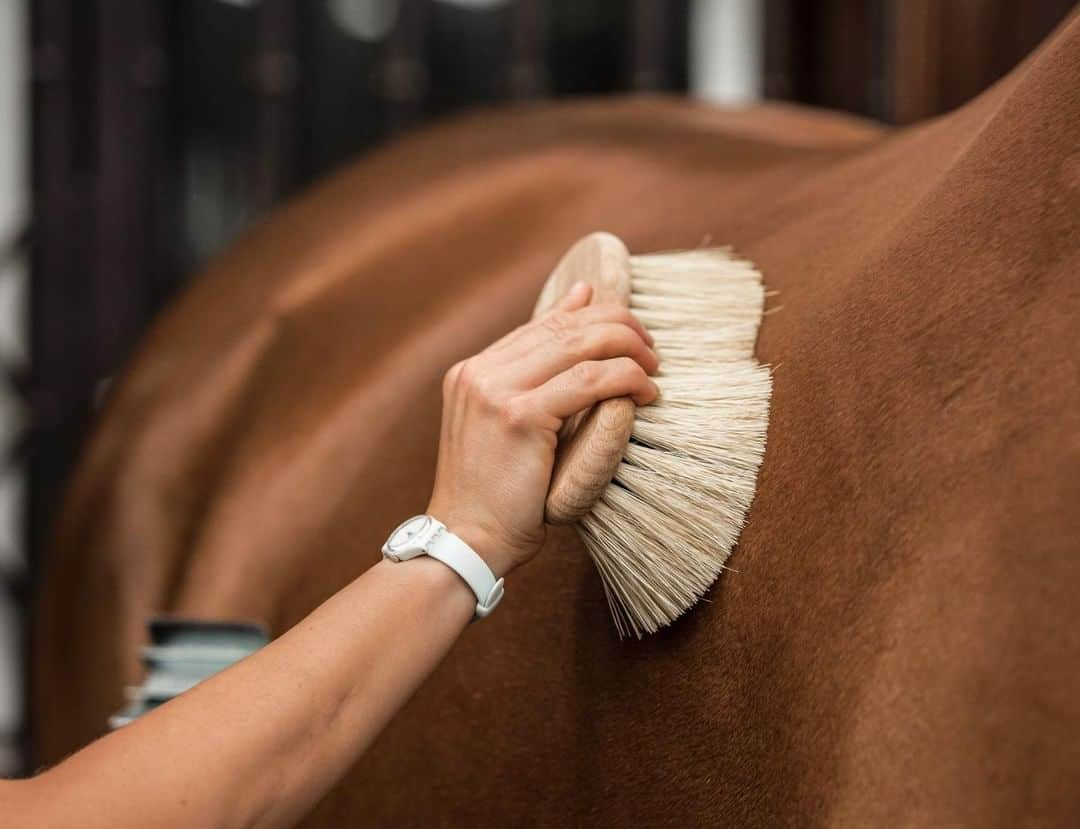 8 tips for Grooming a Horse (that doesn't want to be groomed)