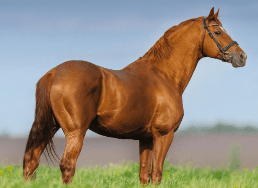 11 ways to build up your horse's topline