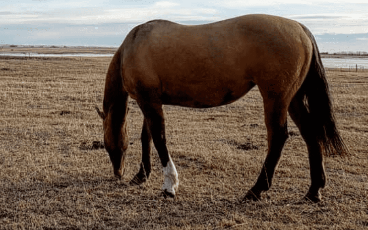 6 Signs That it Might be Time to Sell Your Horse