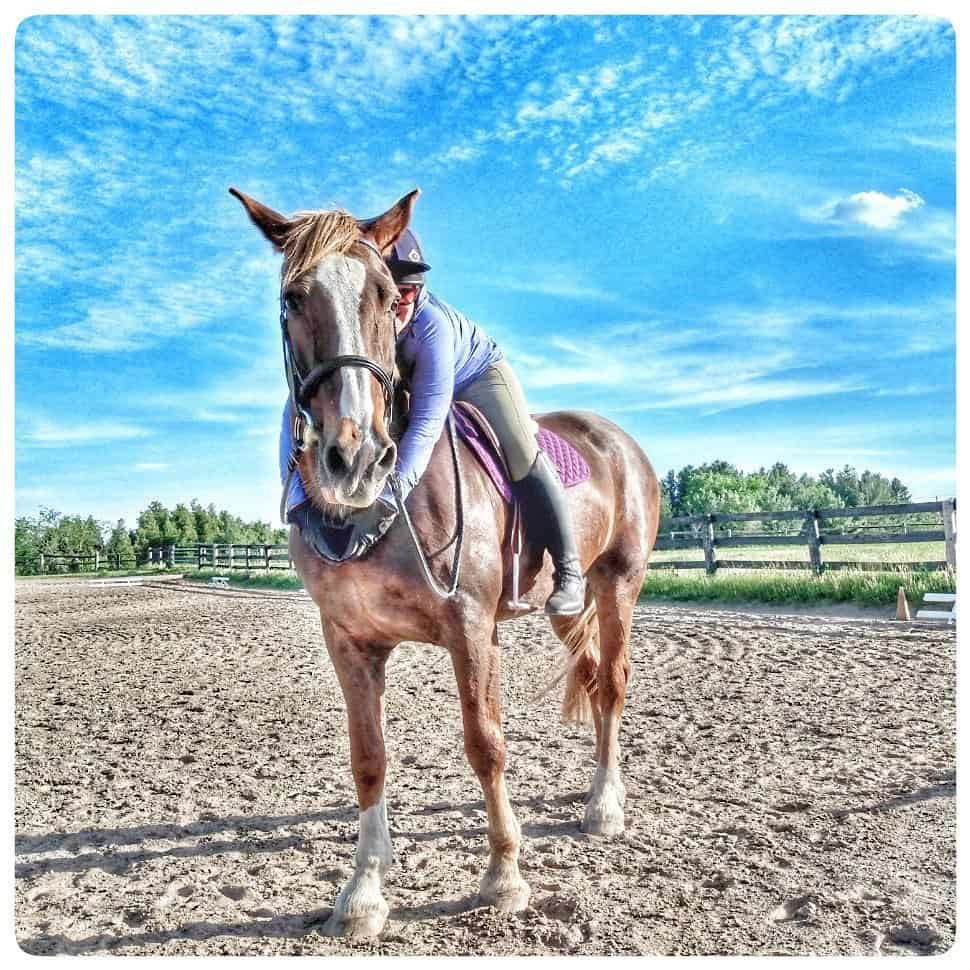 Tips to ensure your senior horse lives their best possible life