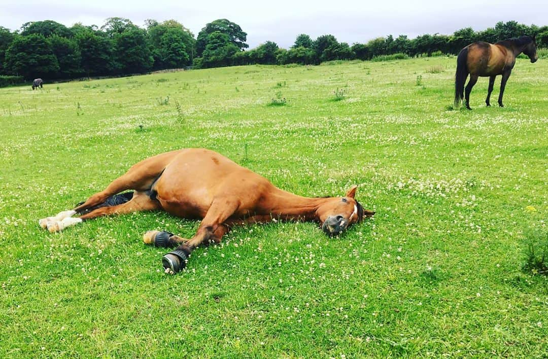 The 7 Most Common Horse Diseases & their Symptoms