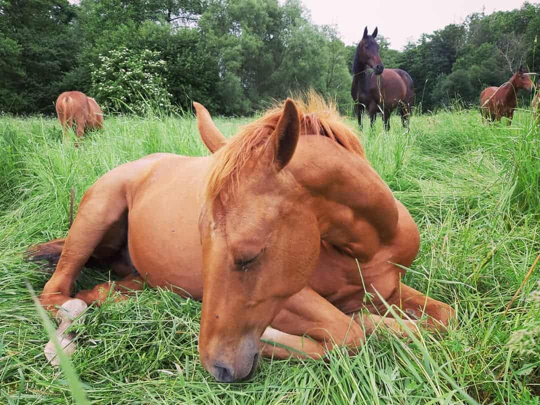 Why Is My Horse Lying Down More Than Usual?