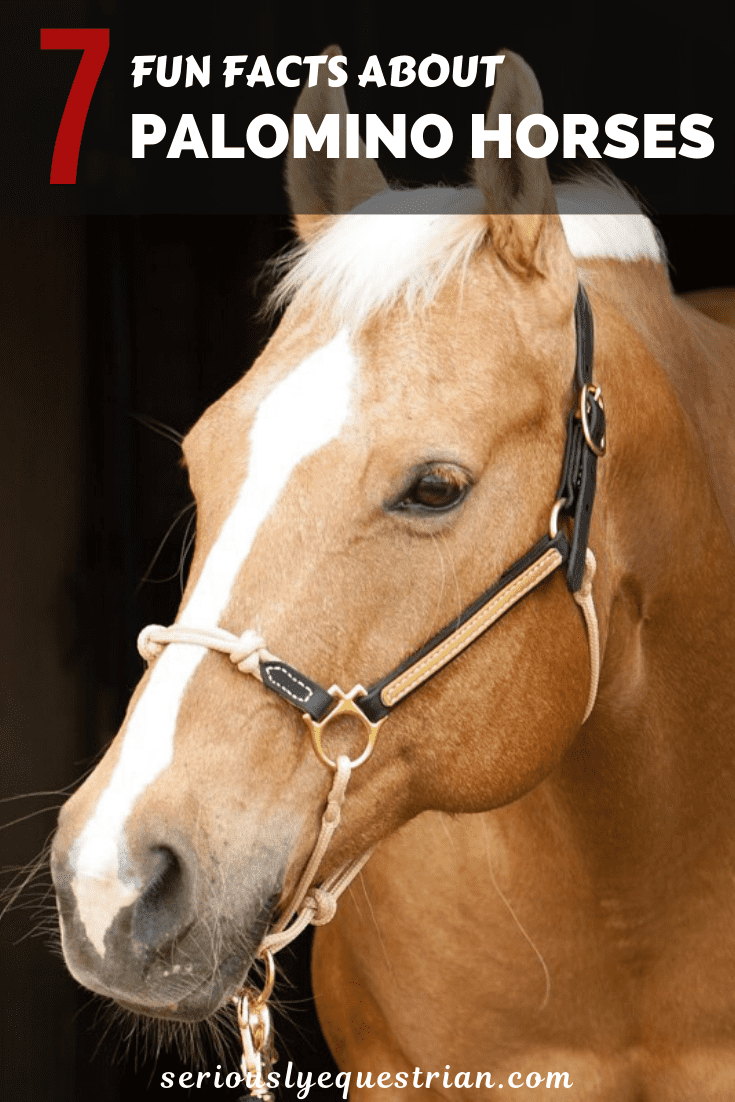 7 Fun Facts About Palomino Horses Seriously Equestrian