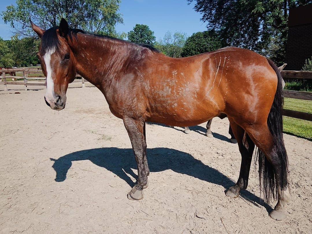 9 tips for Conditioning An Older Horse- Getting back to Work