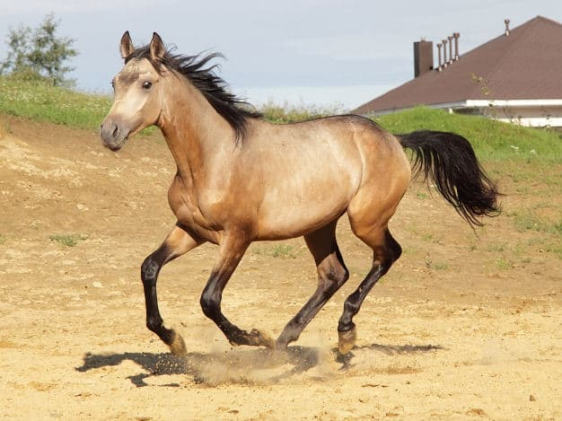 5 Must Know Facts About Dun Horses