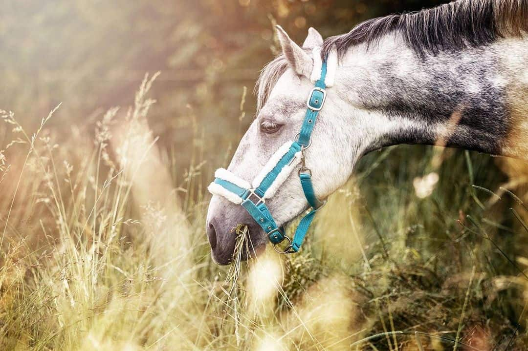 8 Essential Warm Weather Horse Care Tips