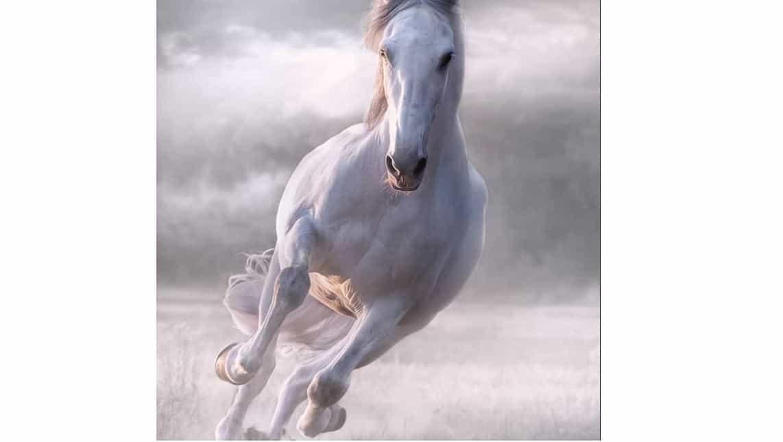25 Names for Horses From Greek Mythology