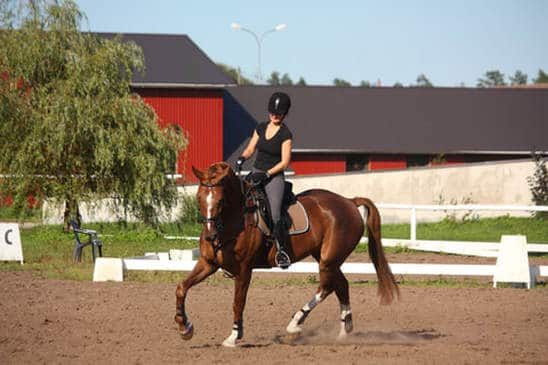 7 Qualities of a Great Horse Rider