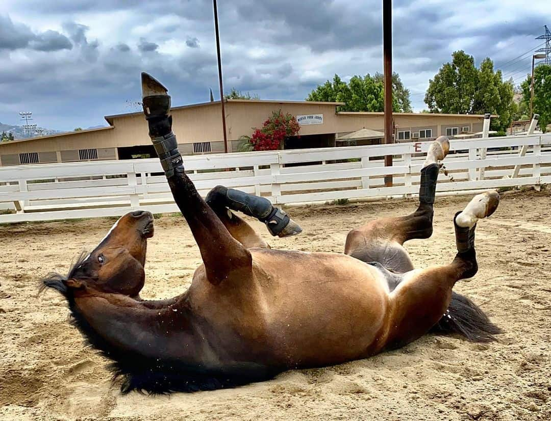 Why do horses roll? Different reasons explained