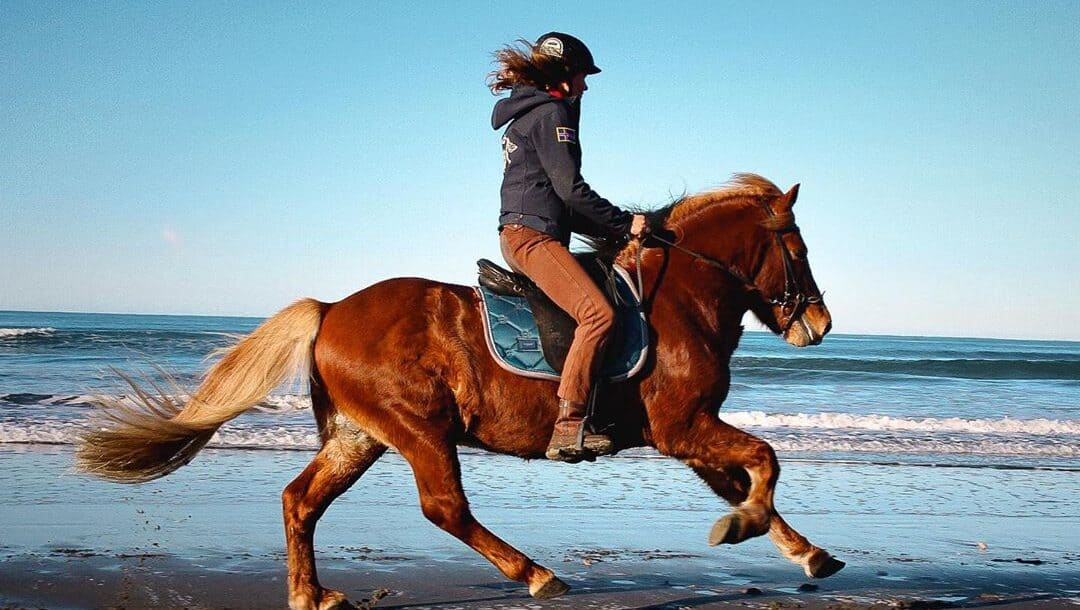 6 Tips To Help You Gallop Safely