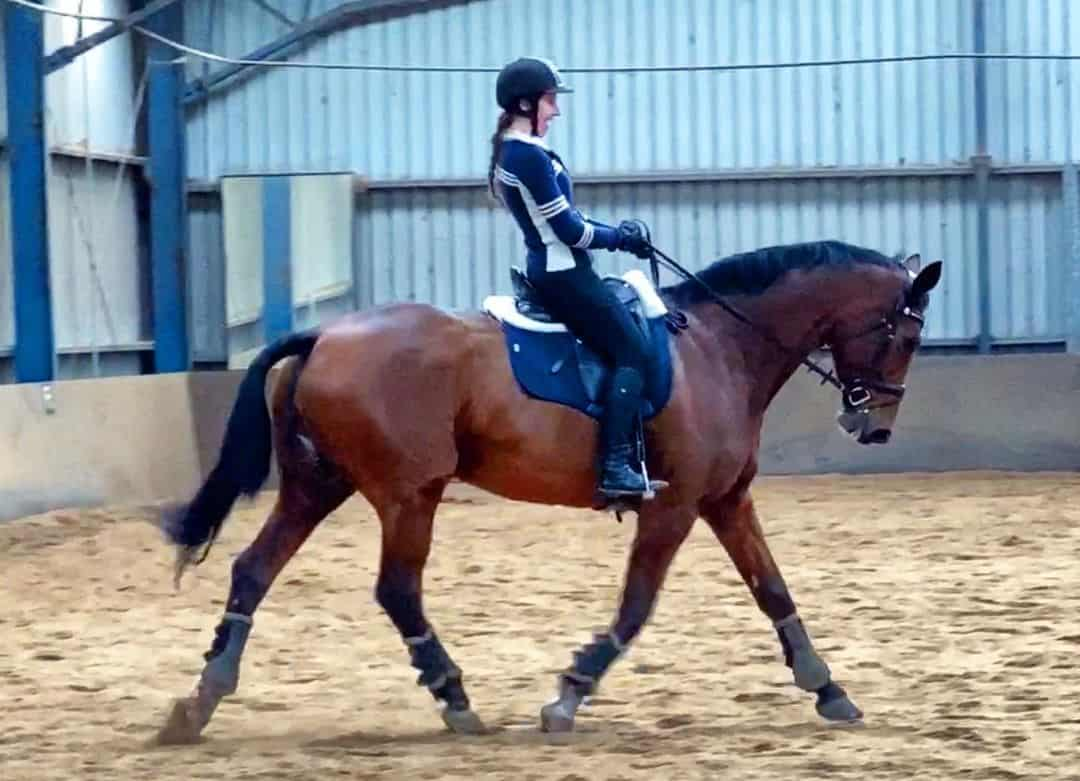 Warmblood Horse 1- Hanoverian