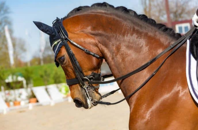 5 Best Horse Breeds for Dressage