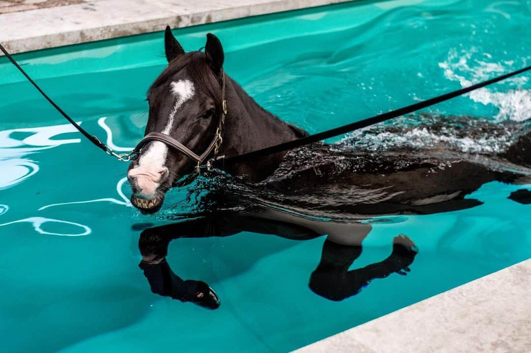 Can Horses Swim? The Facts about horses and swimming